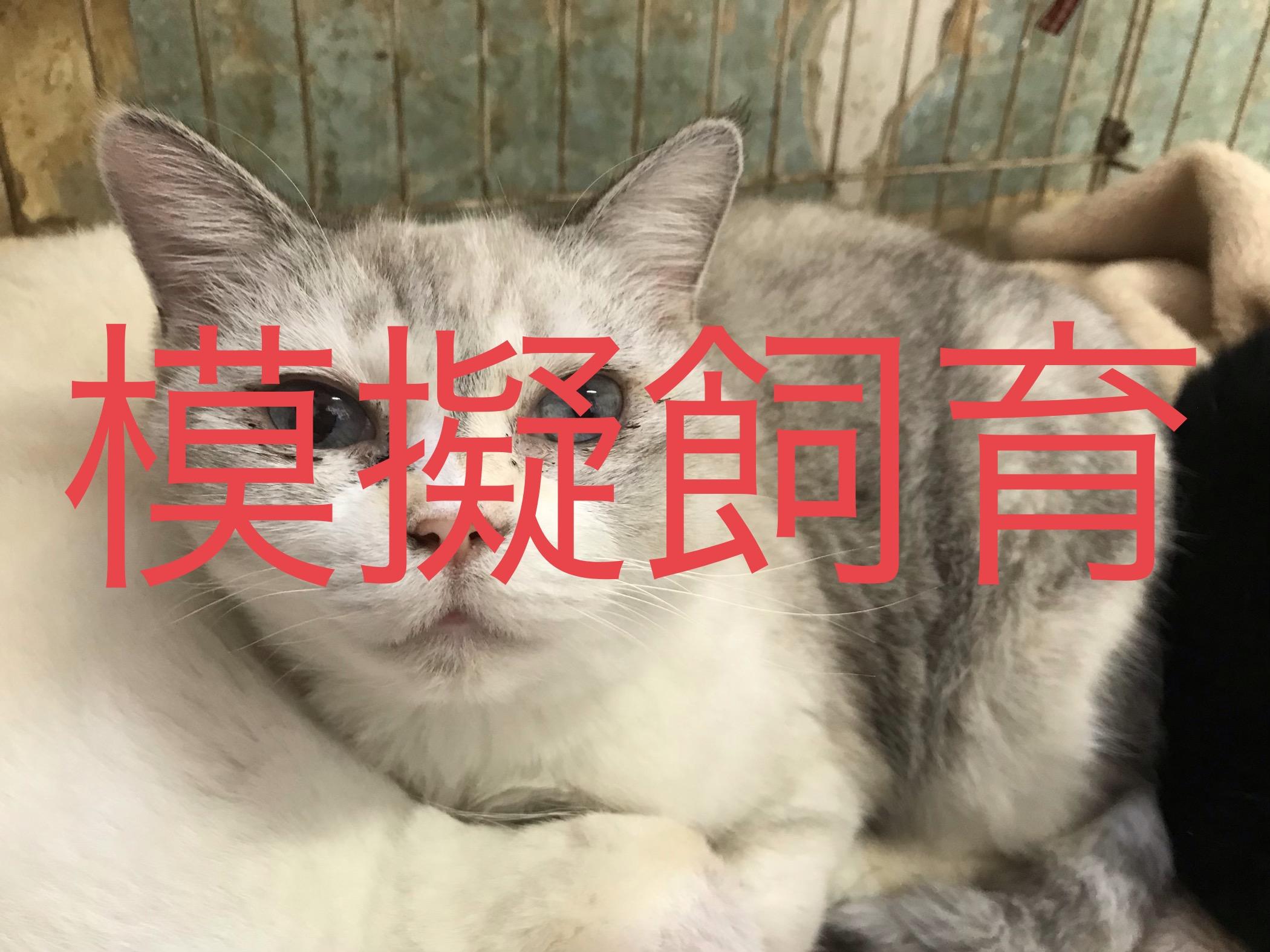<p></p> <ul> <li>猫種:雑種</li> <li>性別:女の子</li> <li>名前:チロ</li> <li>年齢:H18年5月1日</li> <li>保護経緯:引越しのため飼育困難になりました</li> </ul>