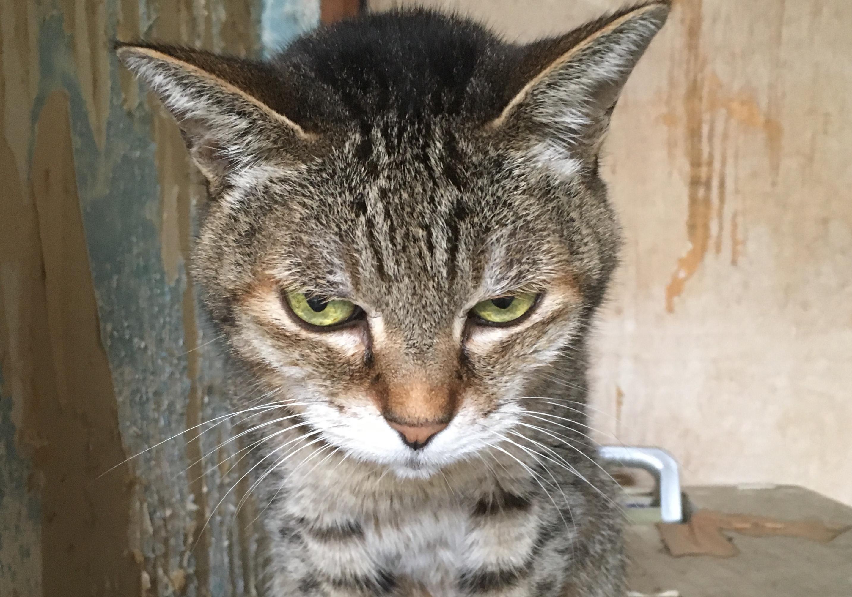 <ul> <li> <li>猫種:日本猫 キジトラ</li> <li>性別:女の子</li> <li>名前:ちーちゃん</li> <li>年齢:9才</li> <li>保護経緯:飼い主様の諸事情により飼育困難になりました</li> <li>その他:避妊済み</li> </ul>