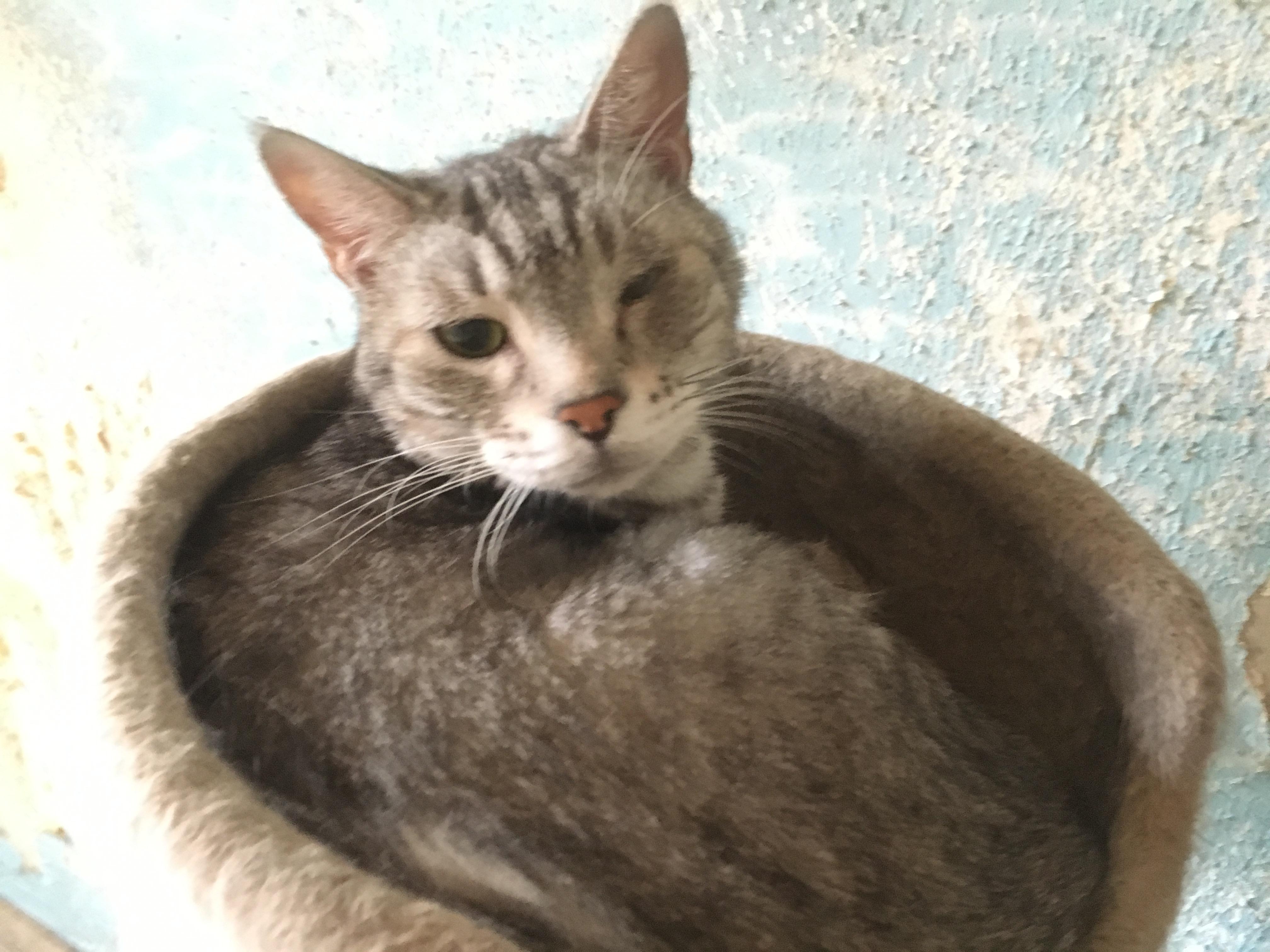 <ul> <li> <li>猫種:日本猫 グレー</li> <li>性別:男の子</li> <li>名前:ユキ</li> <li>年齢:6才</li> <li>保護経緯:引っ越しのため飼育困難になりました</li> <li>その他:去勢済み</li> </ul>