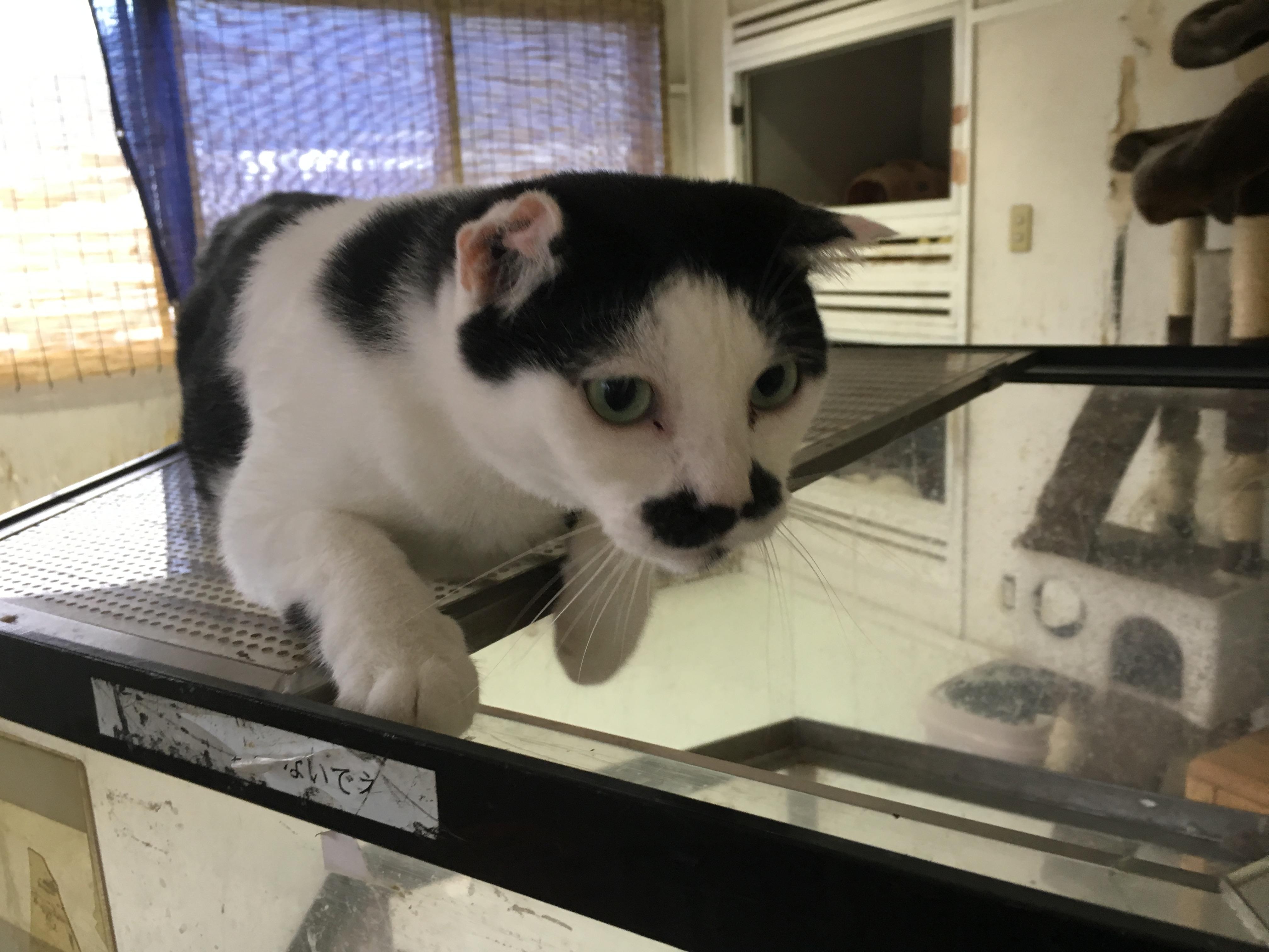 <ul> <li>7-15</li> <li>猫種:日本猫 白黒</li> <li>性別:男の子</li> <li>名前:</li> <li>年齢:8才</li> <li>保護経緯:自宅付近で保護したとのことで連れてこられました</li> <li>その他:去勢済み</li> </ul>