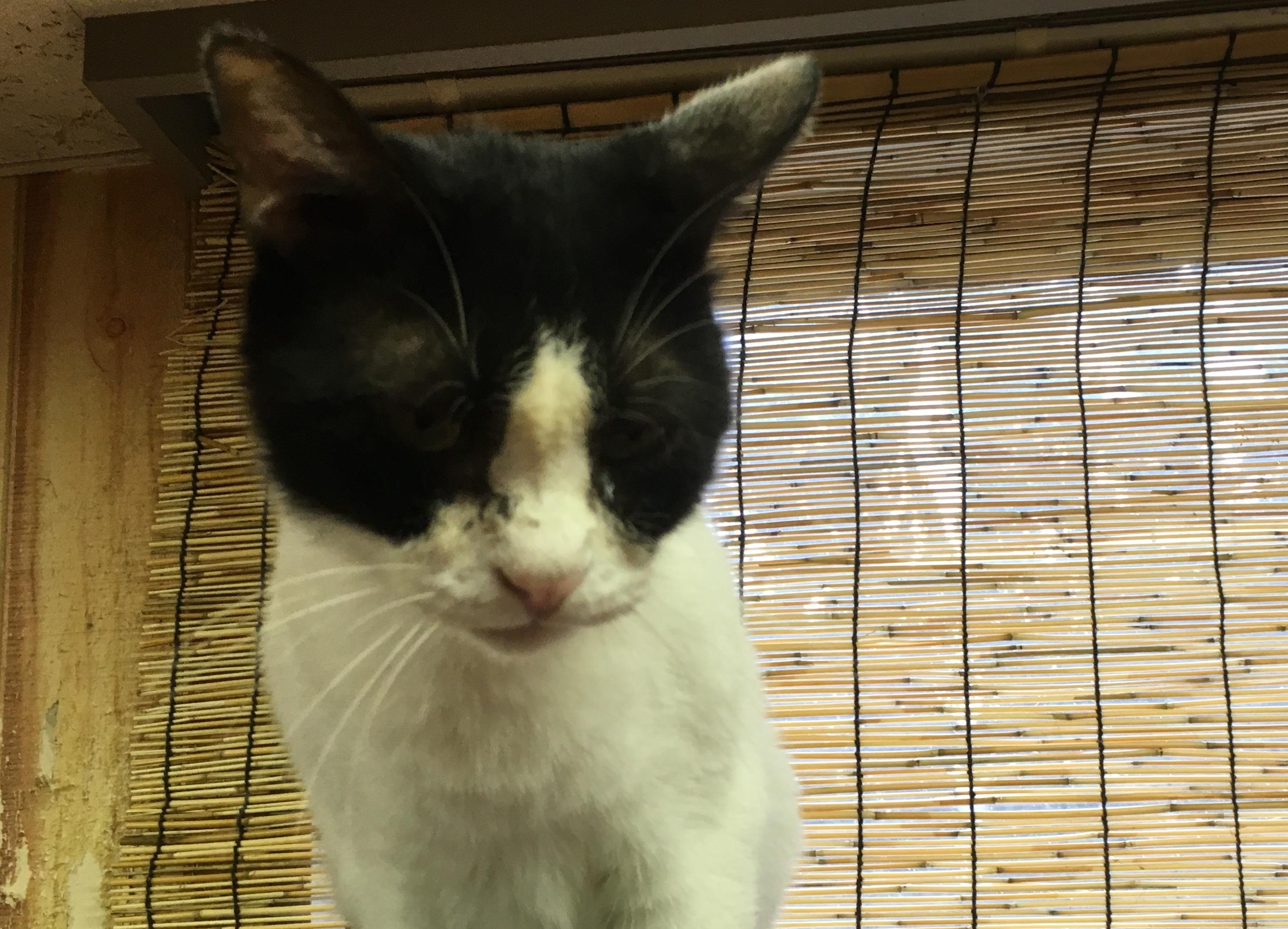 <ul> <li>G10-9</li> <li>猫種:日本猫 黒白</li> <li>性別:男の子</li> <li>名前:ゼンザイ</li> <li>年齢:4才</li> <li>保護経緯:飼い主様の諸事情により飼育困難になりました</li> <li>その他:去勢済み</li> </ul>