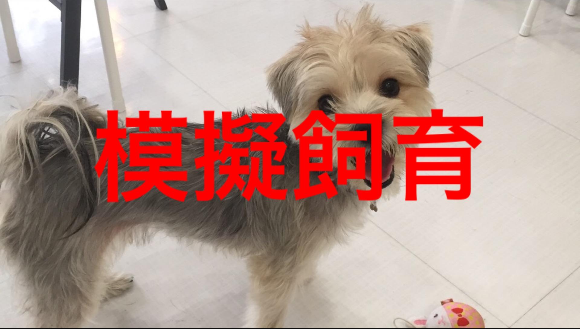 <p>&nbsp;</p> <ul> <li>犬種:MIX犬 ヨーキー×マルチーズ</li> <li>性別:男の子</li> <li>名前:はる</li> <li>年齢:2歳半</li> <li>保護経緯:引越しのため飼育困難になりました</li> </ul>