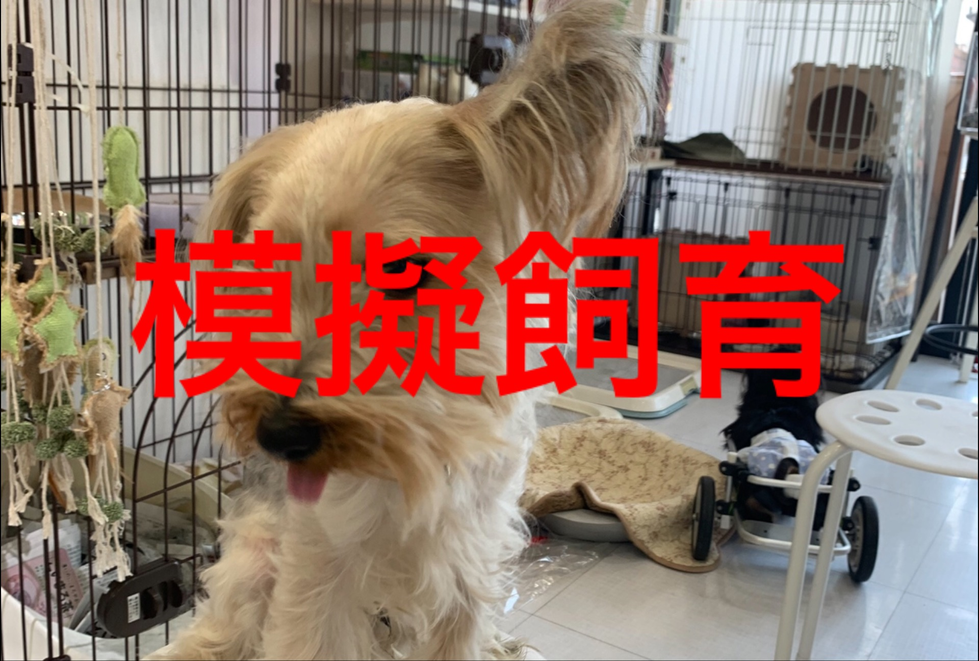 <ul> <li>東2-5</li> <li>犬種:スチールブルータン</li> <li>性別:男の子</li> <li>名前:NALU</li> <li>年齢:2017.6.4生まれ</li> <li>保護経緯:飼い主様の病気療養により飼育困難になりました</li> </ul>