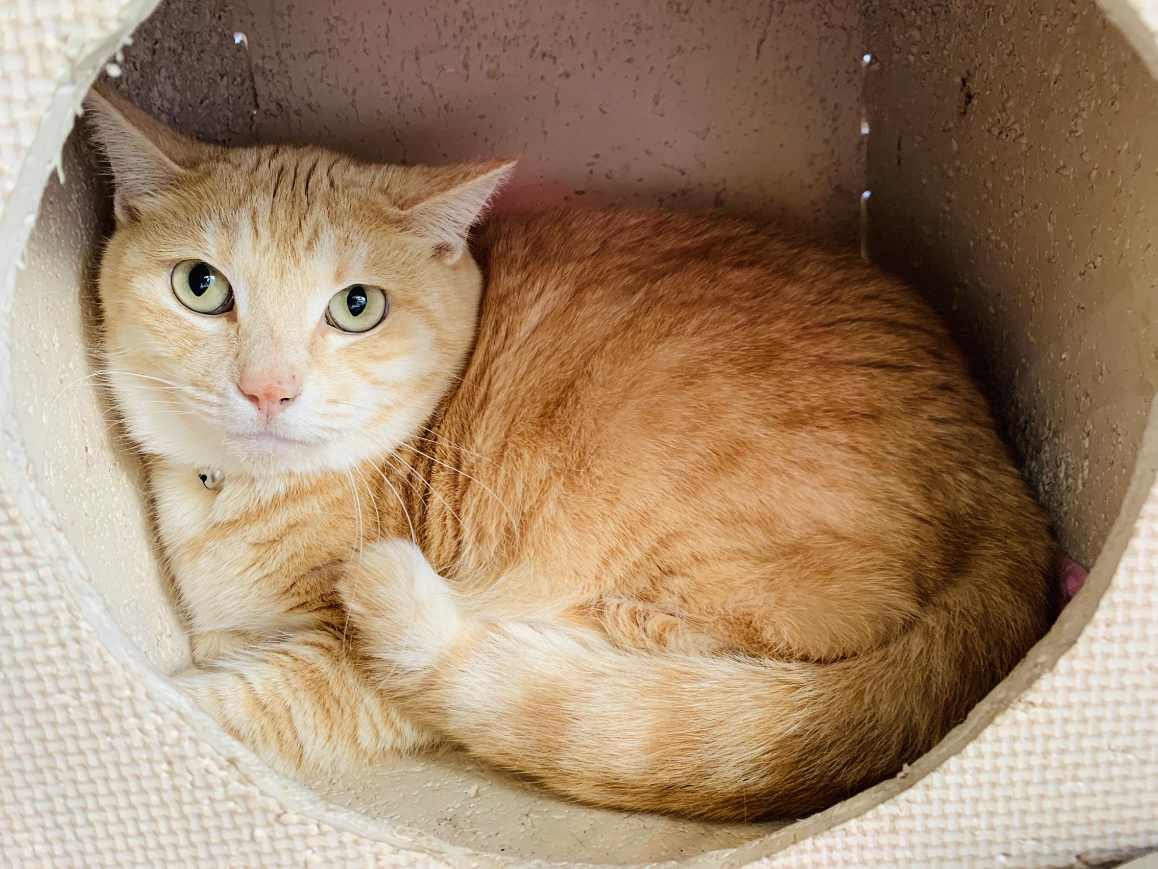<ul> <li>東2-2</li> <li>猫種:日本猫 茶トラ</li> <li>性別:女の子</li> <li>名前:らん</li> <li>年齢:H24.8月生まれ</li> <li>保護経緯:飼い主様が高齢のため飼育困難になりました</li> <li>少し人見知りがあります</li> </ul>