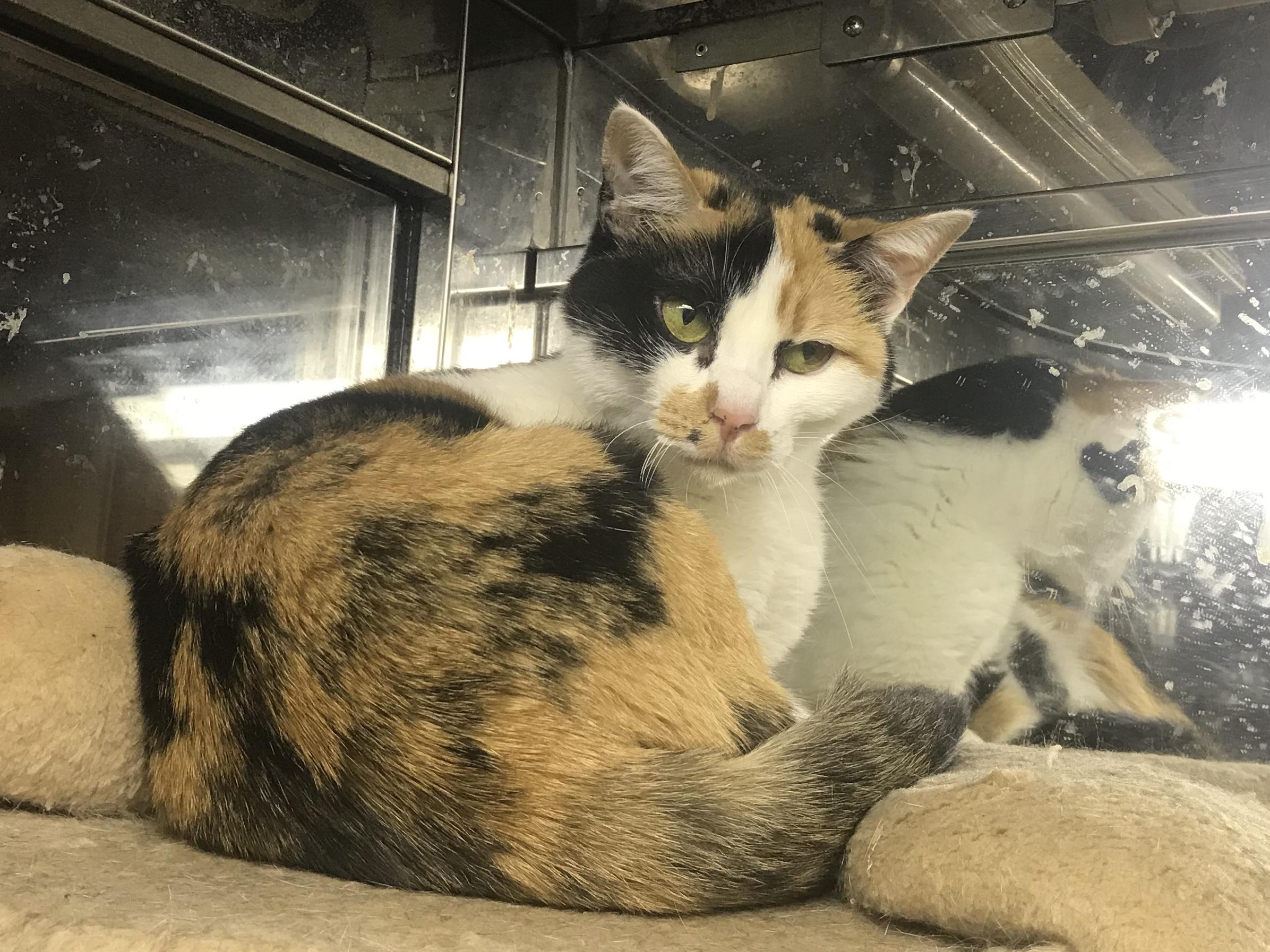 <p></p> <ul> <li>猫種:日本猫 三毛</li> <li>性別:女の子</li> <li>名前:テン</li> <li>年齢:2015年7月</li> <li>保護経緯:飼い主様が病気療養のため飼育困難になりました</li> </ul>