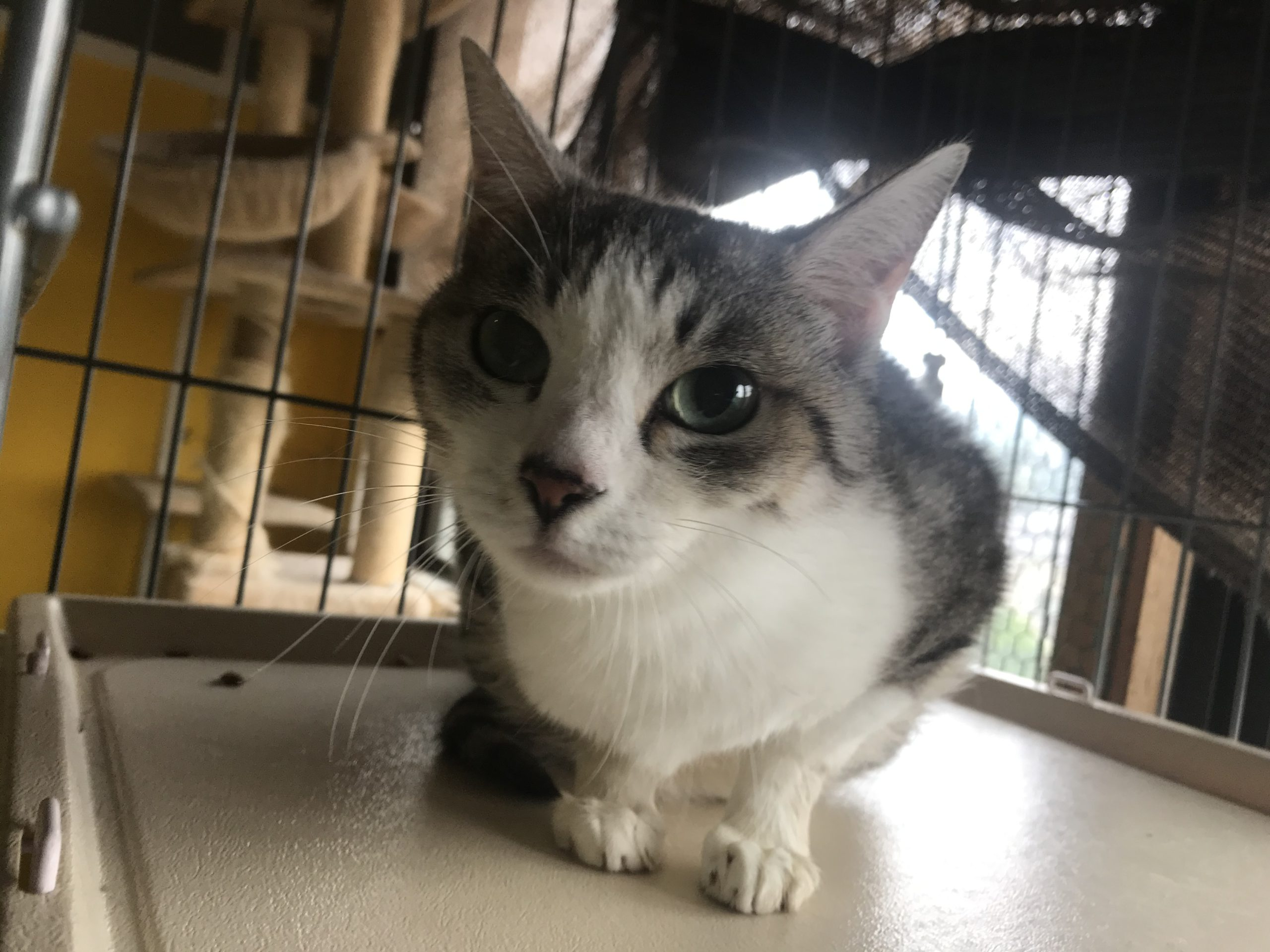 <p></p> <ul> <li>猫種:日本猫 キジ白</li> <li>性別:女の子</li> <li>名前:ミルク</li> <li>年齢:2011年4月</li> <li>保護経緯:飼い主様が引っ越しのため飼育困難になりました</li> </ul>