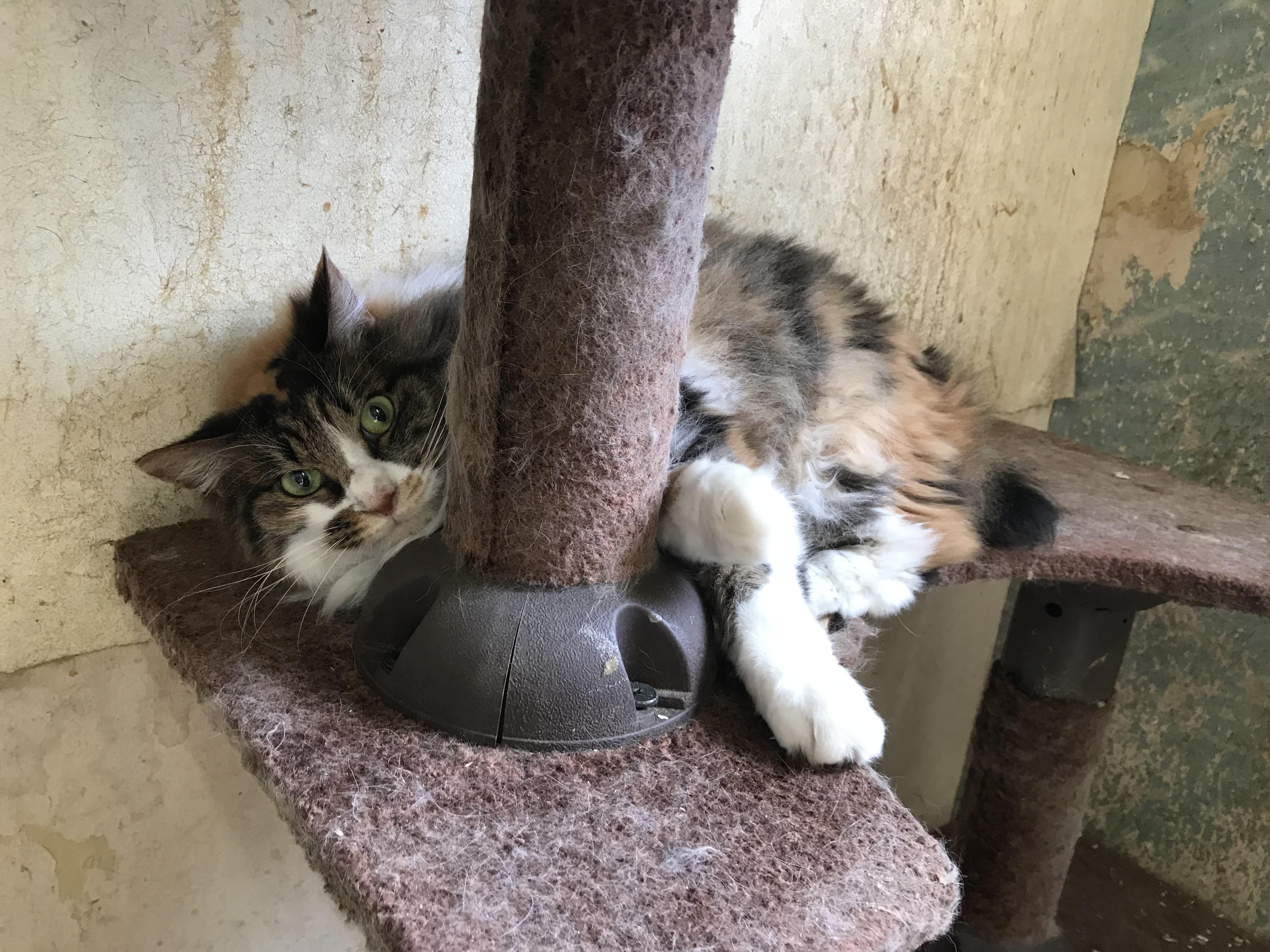 <p></p> <ul> <li>猫種:日本猫 三毛 長毛</li> <li>性別:女の子</li> </ul>