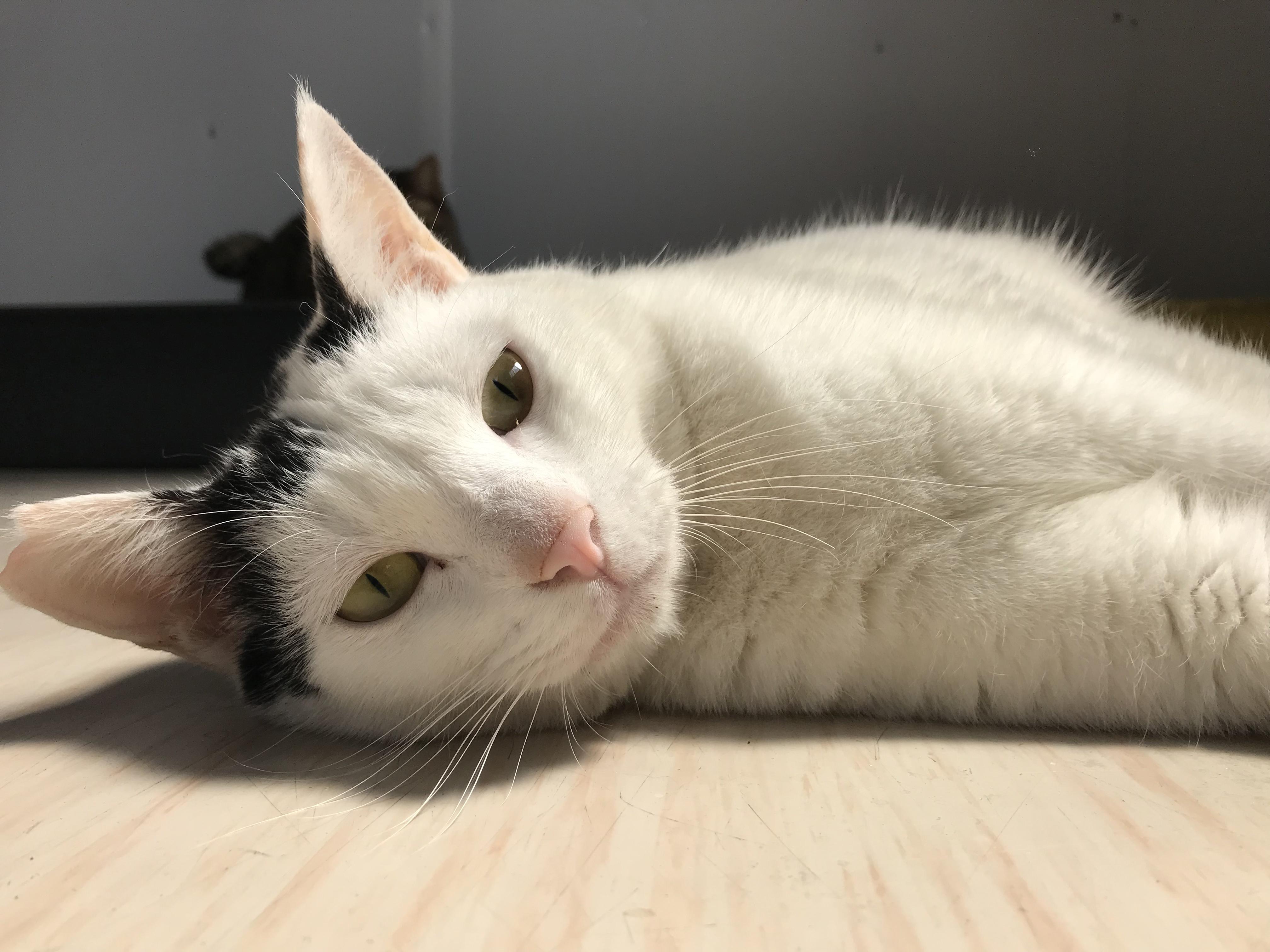 <p></p> <ul> <li>猫種:日本猫 白黒</li> <li>性別:男の子</li> <li>名前:シロ</li> <li>年齢:H30年 春</li> <li>保護経緯:里親さんを探して欲しいとの事でセンターに連れてこられました。</li> </ul>