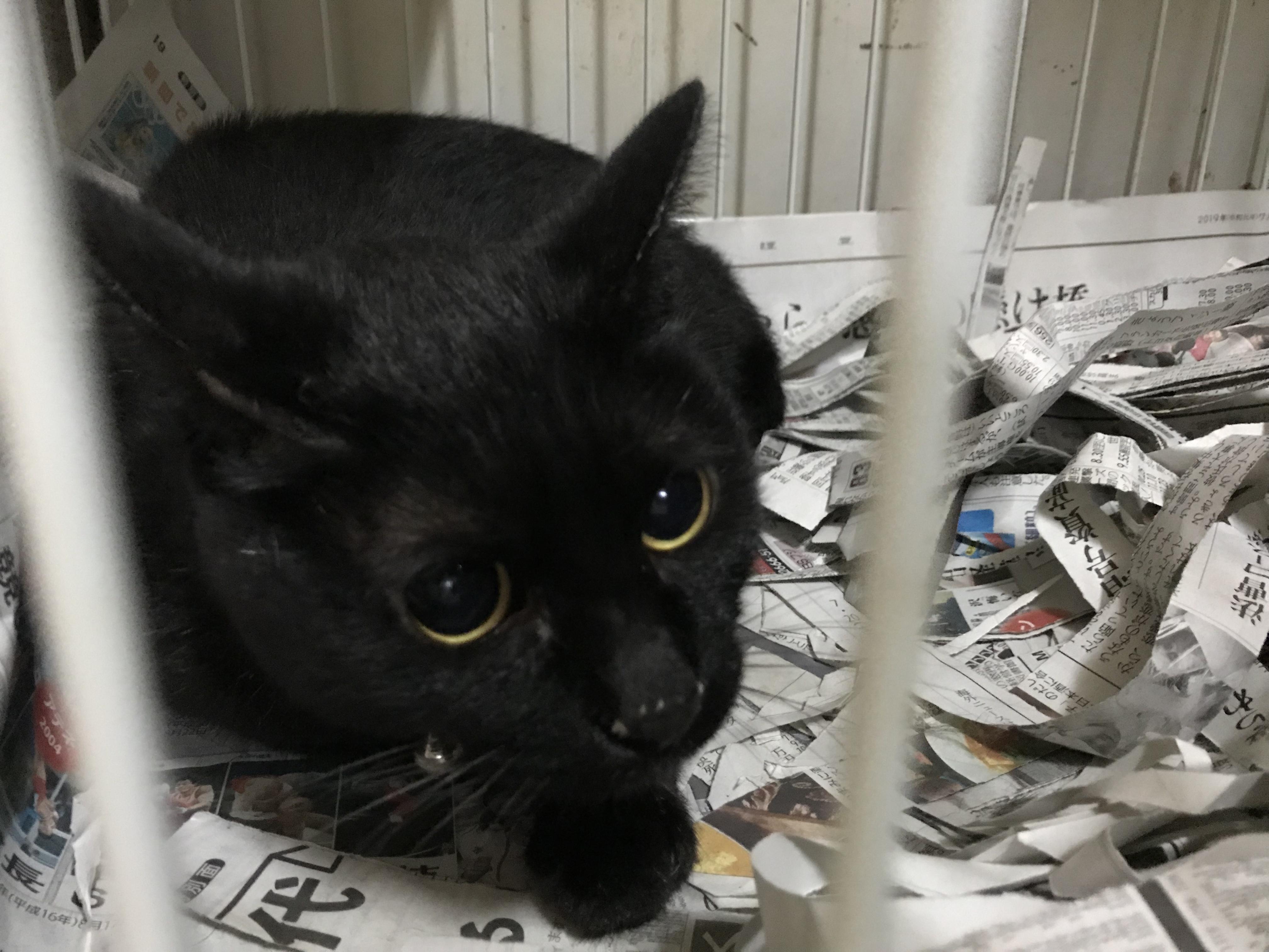<p></p> <ul> <li>猫種:日本猫 黒</li> <li>性別:女の子</li> <li>名前:はな</li> <li>年齢:2011年7月</li> <li>保護経緯:家族の方がアレルギーのため飼育困難になりました</li> </ul>