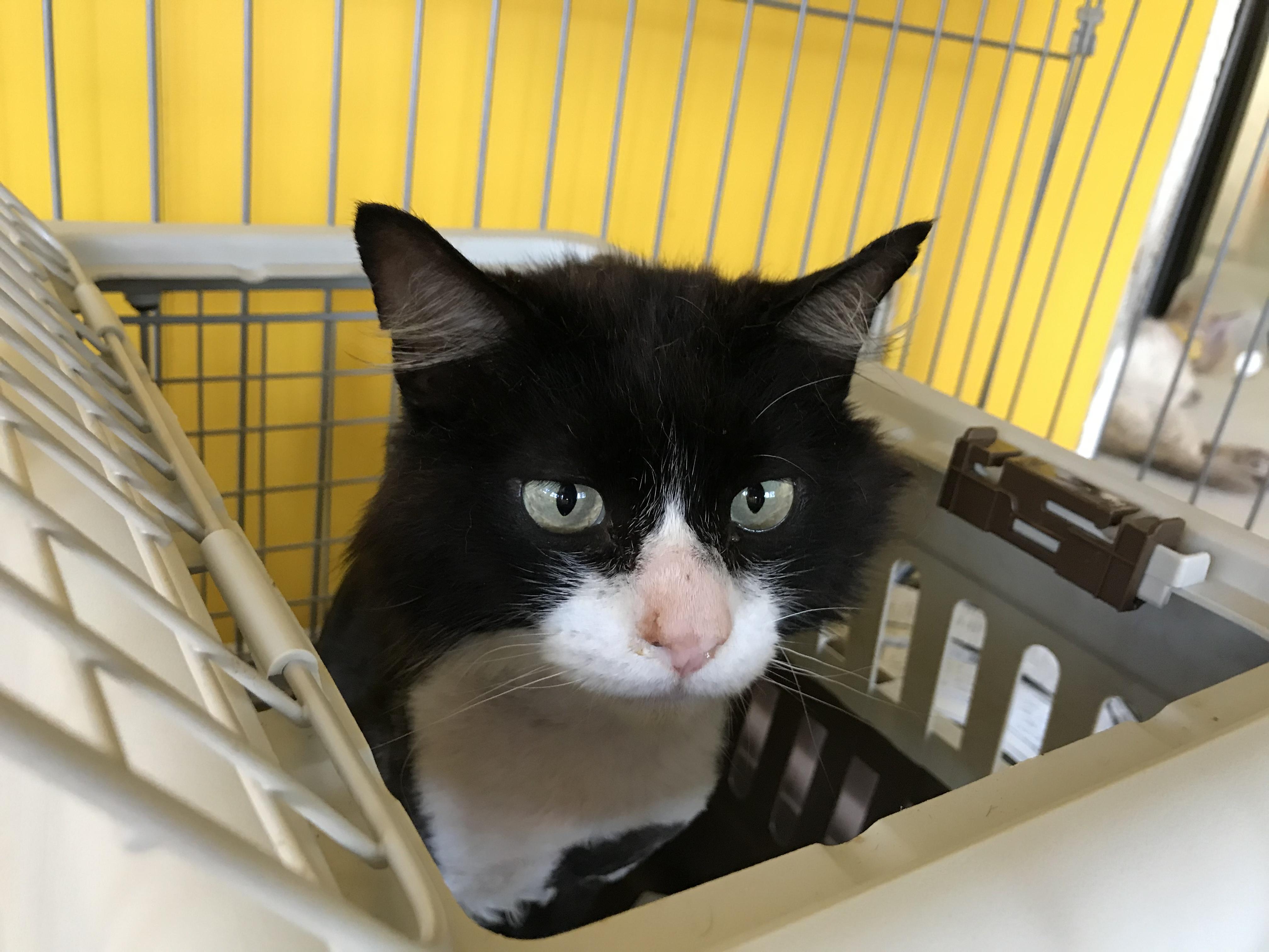 <p></p> <ul> <li>猫種:日本猫 黒白</li> <li>性別:男の子</li> <li>名前:ロム</li> <li>年齢:3~4歳</li> <li>保護経緯:駐車場で迷っていたのを保護し、センターへ連れてこられました</li> </ul>