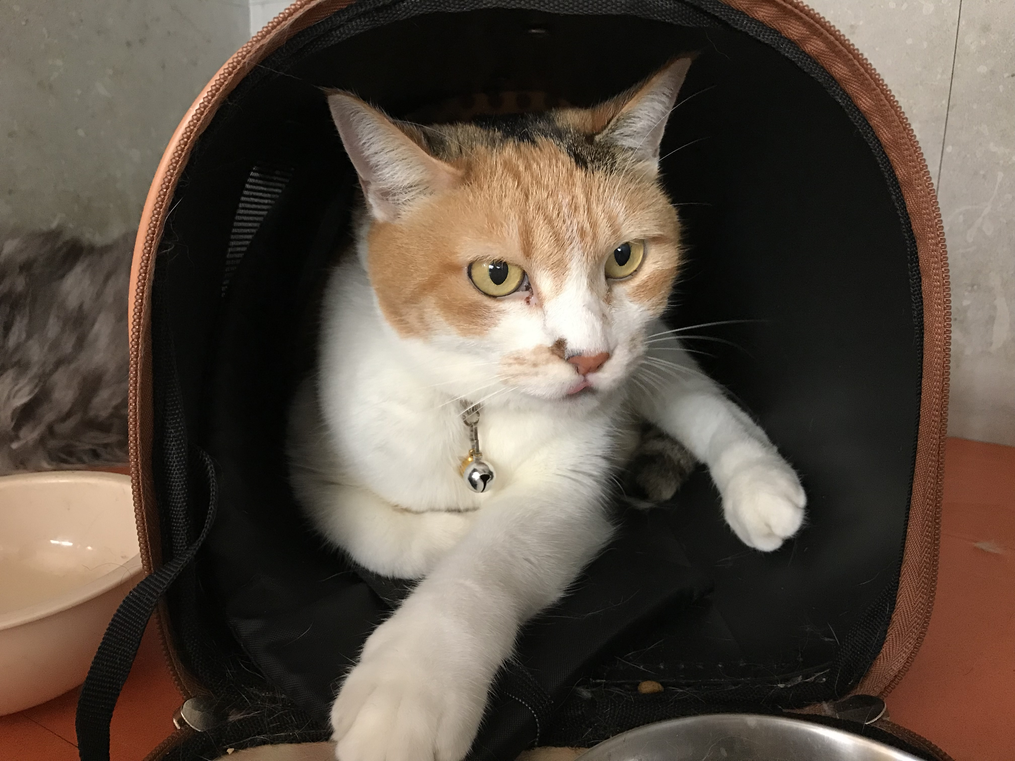 <p></p> <ul> <li>猫種:日本猫  三毛</li> <li>性別:女の子</li> <li>名前:ミーちゃん</li> <li>年齢:2008年9月</li> <li>保護経緯:飼い主様が入院されるため飼育困難になりました</li> </ul>