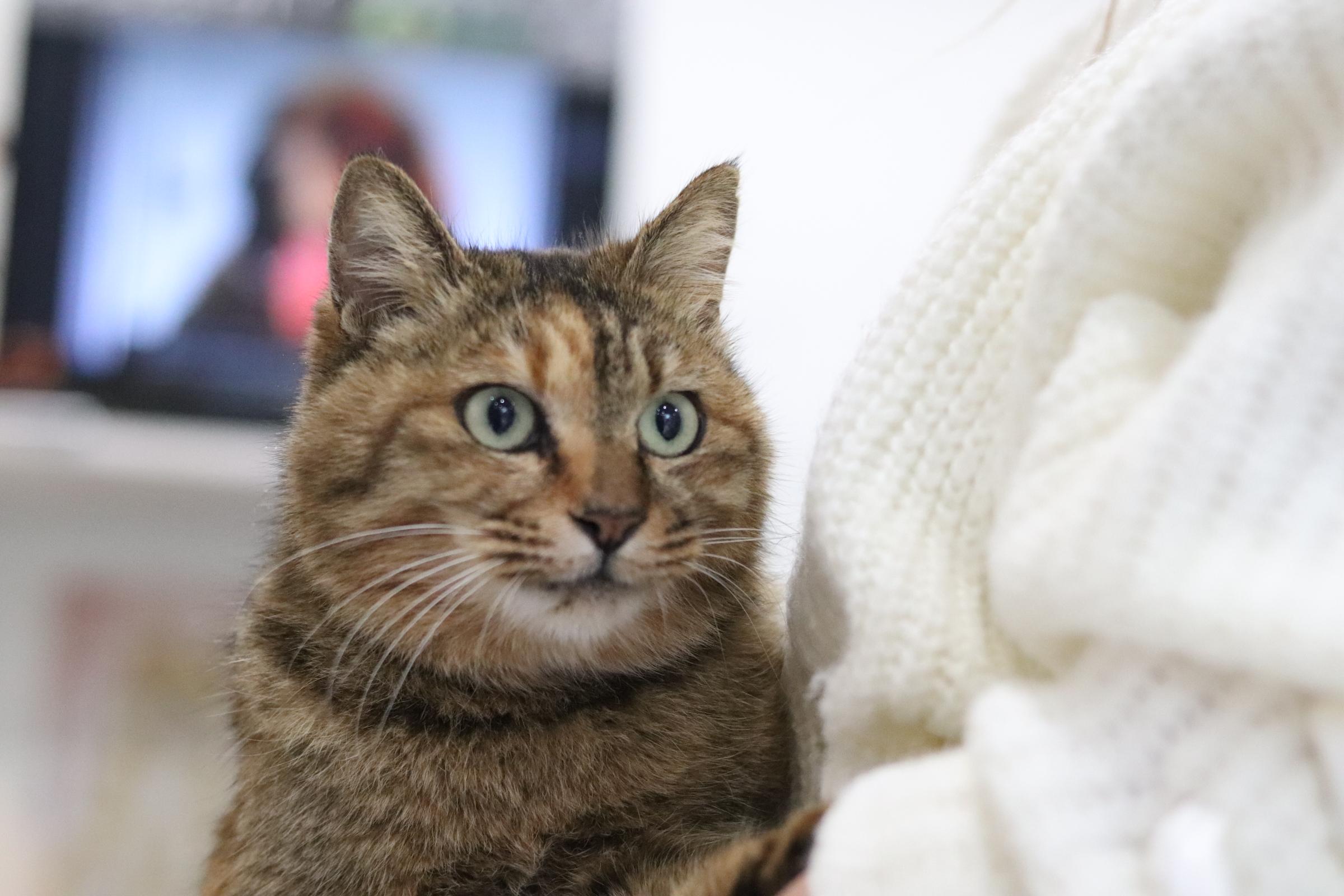 <ul> <li>猫種:日本猫</li> <li>性別:女の子</li> <li>名前:ナナ</li> <li>年齢:2017.11.20位生まれ</li> <li>保護経緯:地域猫を保護し人馴れしたので里親さんを探して欲しいとの事で保護しました</li> </ul>