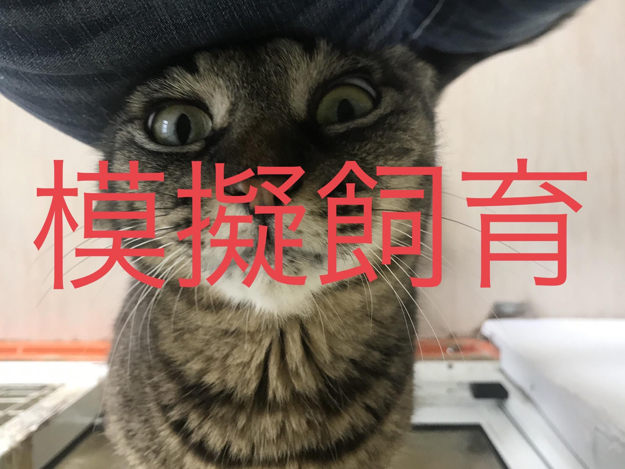 <p></p> <ul> <li>猫種:日本猫 キジトラ</li> <li>性別:男の子</li> <li>名前:しま</li> <li>年齢:2013年5月</li> <li>保護経緯:急な引越しのため飼育困難になりました</li> </ul>
