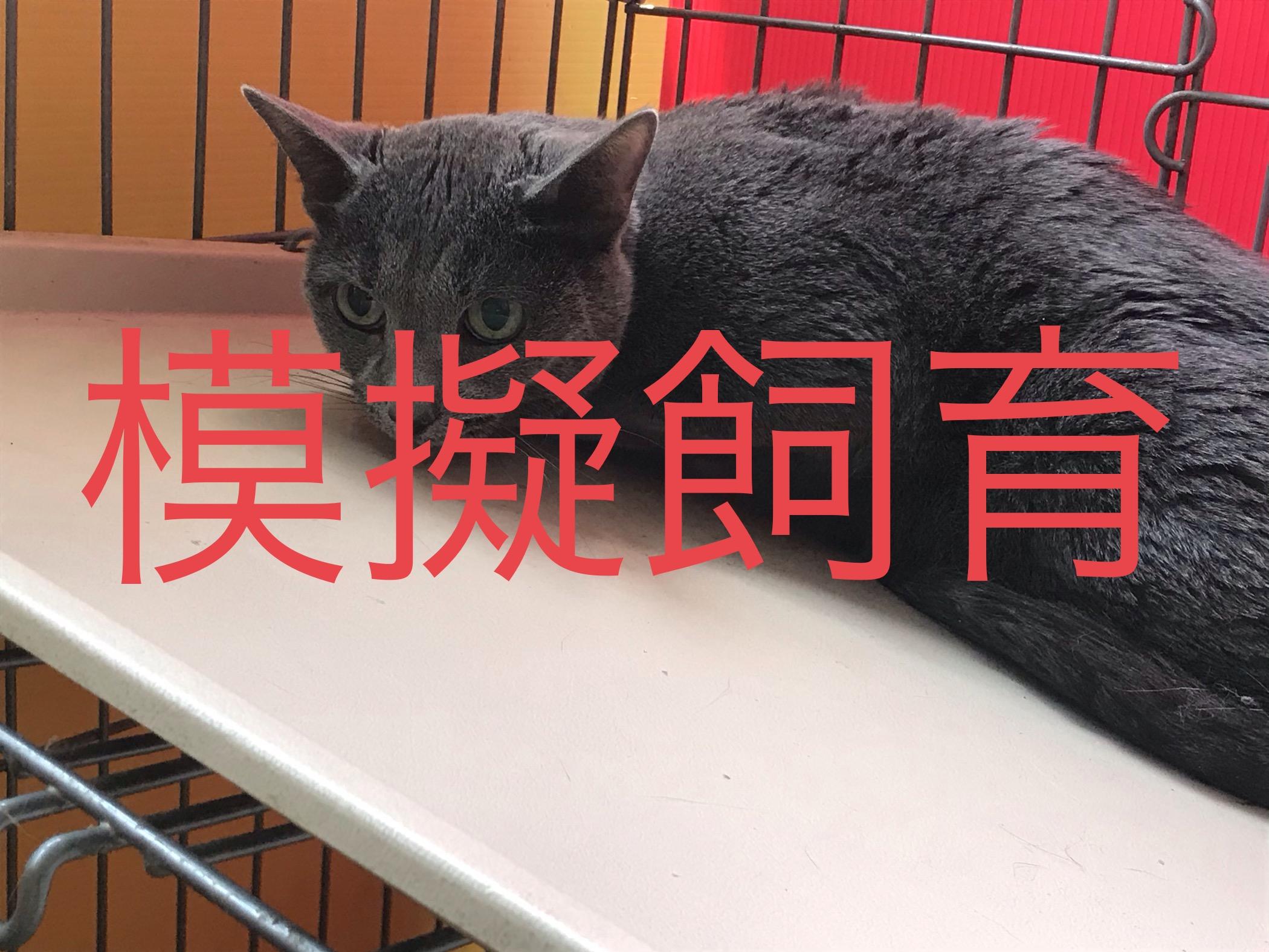 <p></p> <ul> <li>猫種:ロシアンブルー</li> <li>性別:男の子</li> <li>名前:クラロ</li> <li>年齢:2009年2月7日</li> <li>保護経緯:飼い主様が亡くなられたの為飼育困難になりました</li> </ul>
