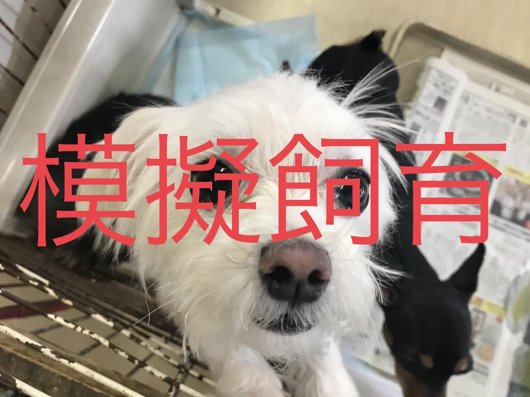 <ul> <li>犬種:マルチーズ</li> <li>性別:女の子</li> <li>名前:きなこ</li> <li>年齢:2015年5月</li> <li>保護経緯:飼い主様の諸事情のため飼育困難になりました</li> </ul>
