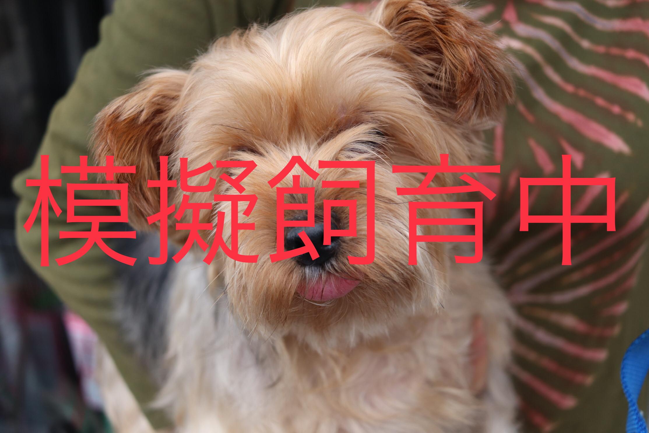 <p>犬種:ヨークシャテリア</p> <ul> <li>性別:女の子</li> <li>名前:ココ</li> <li>年齢:2010年12月22日生まれ</li> <li>保護経緯:家族が病気療養になり飼育困難</li> </ul>