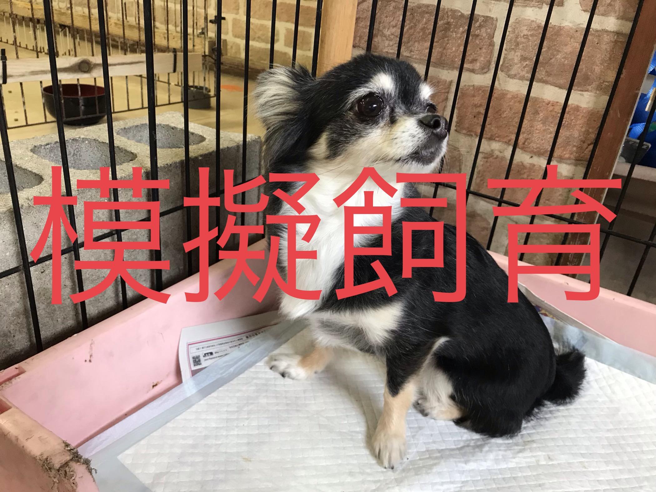 <ul> <li>犬種:チワワ BT</li> <li>性別:女の子</li> <li>名前:くぅちゃん</li> <li>年齢:2012年3月25日</li> <li>保護経緯:飼い主様の諸事情のため飼育困難になりました</li> </ul>