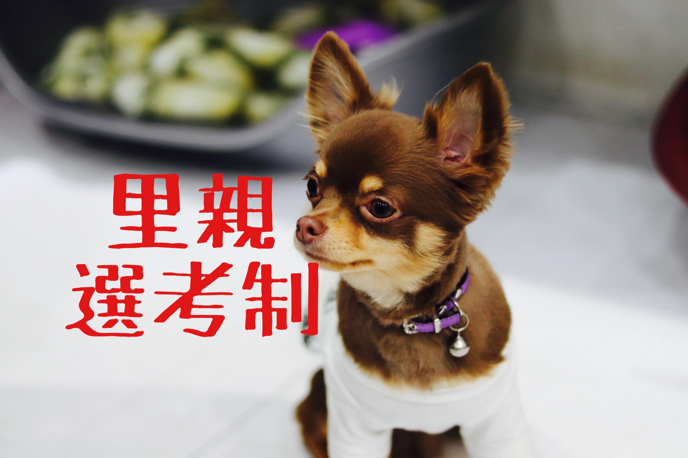 <ul> <li>犬種:ロングコートチワワ(チョコタン)</li> <li>性別:男の子</li> <li>名前:チョコ</li> <li>年齢:2020年1月10日生まれ</li> <li>保護経緯:子どもにアレルギー発症のため飼育困難</li> </ul>