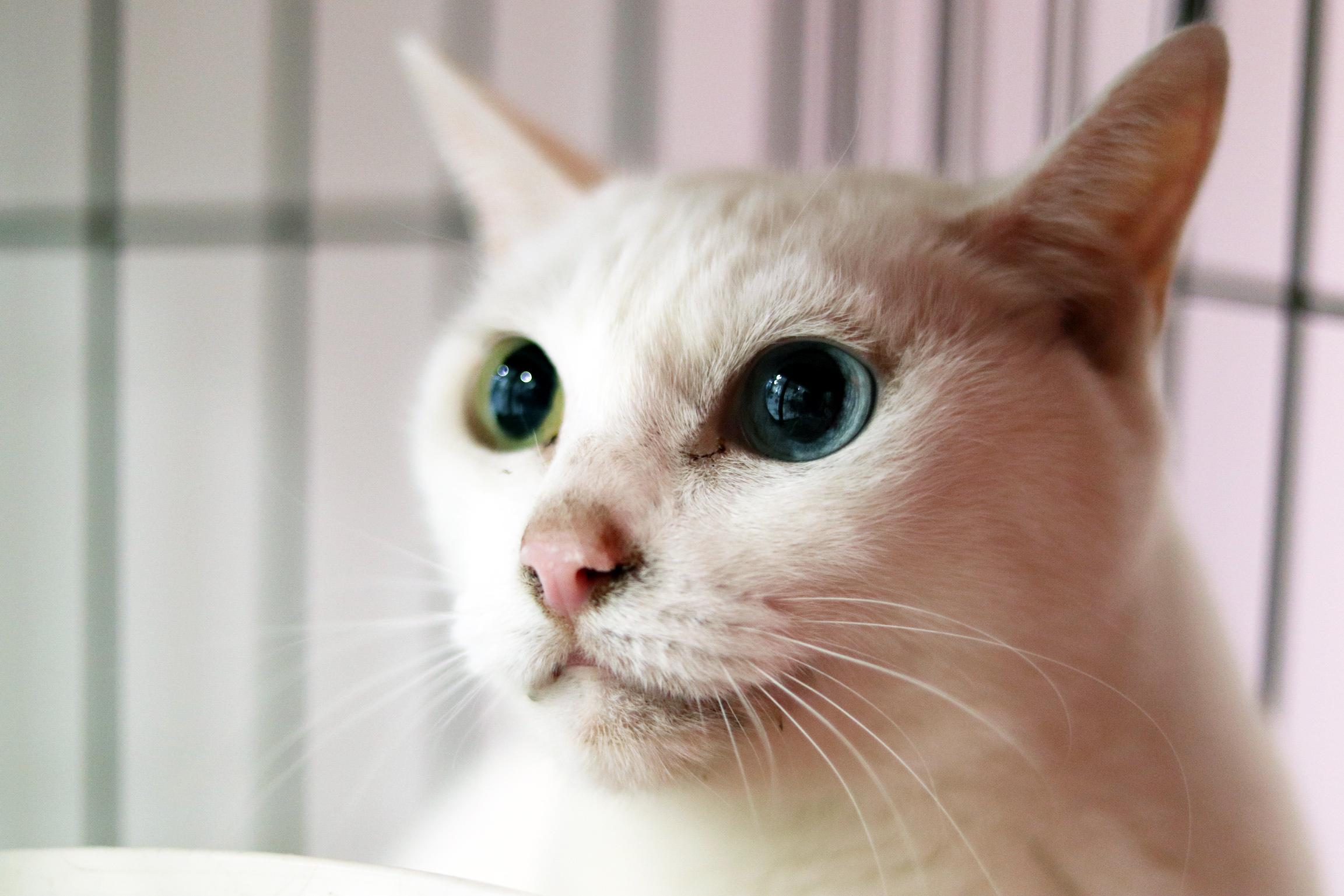<ul> <li>猫種:日本猫(白)</li> <li>性別:不明</li> <li>名前:名前をつけてあげてね</li> <li>年齢:2010年頃生まれ</li> <li>保護経緯:高齢の飼い主が逝去し、親族も引き継ぐことが出来ず飼育困難</li> </ul>