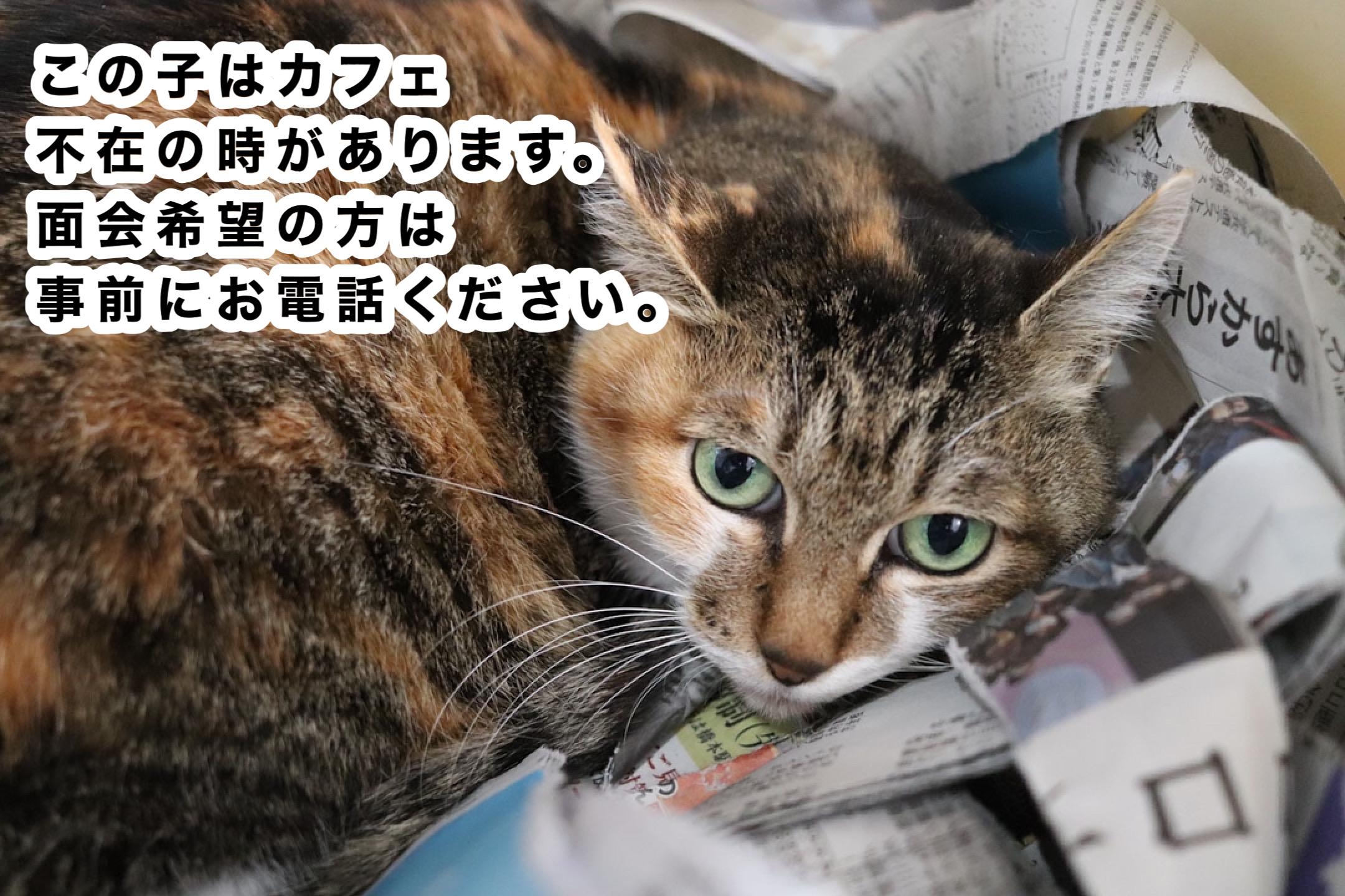 <ul> <li>猫種:日本猫 性別:女の子 名前:マッコ 年齢:2014年頃生まれ 保護経緯:飼い主が高齢になり施設へ入居し、親族も引き継いで飼うことが出来ない</li> </ul>