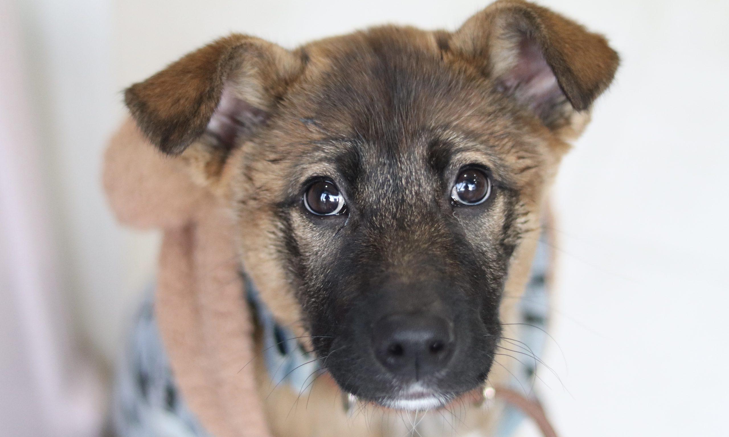 <ul> <li>犬種:雑種</li> <li>性別:女の子</li> <li>名前:モモ</li> <li>年齢:2020年11月1日生まれ</li> <li>保護経緯:ダンボールに入れて捨てられていた子犬の里親になったが、家族の介護が始まり飼育困難</li> </ul>