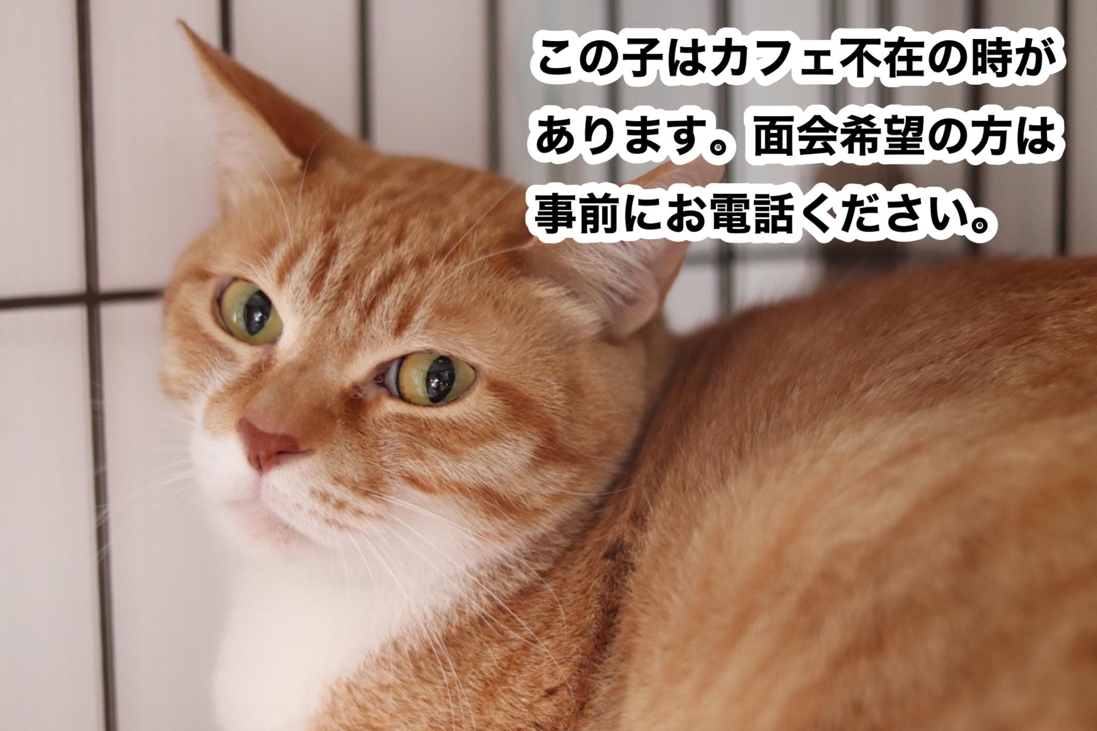 <ul> <li>猫種:日本猫(茶トラ)</li> <li>性別:女の子</li> <li>名前:むむ</li> <li>年齢:2011年頃生まれ</li> <li>保護経緯:飼い主が高齢になり施設に入居することになり、親族も引き継いで飼うことが出来ない</li> </ul>