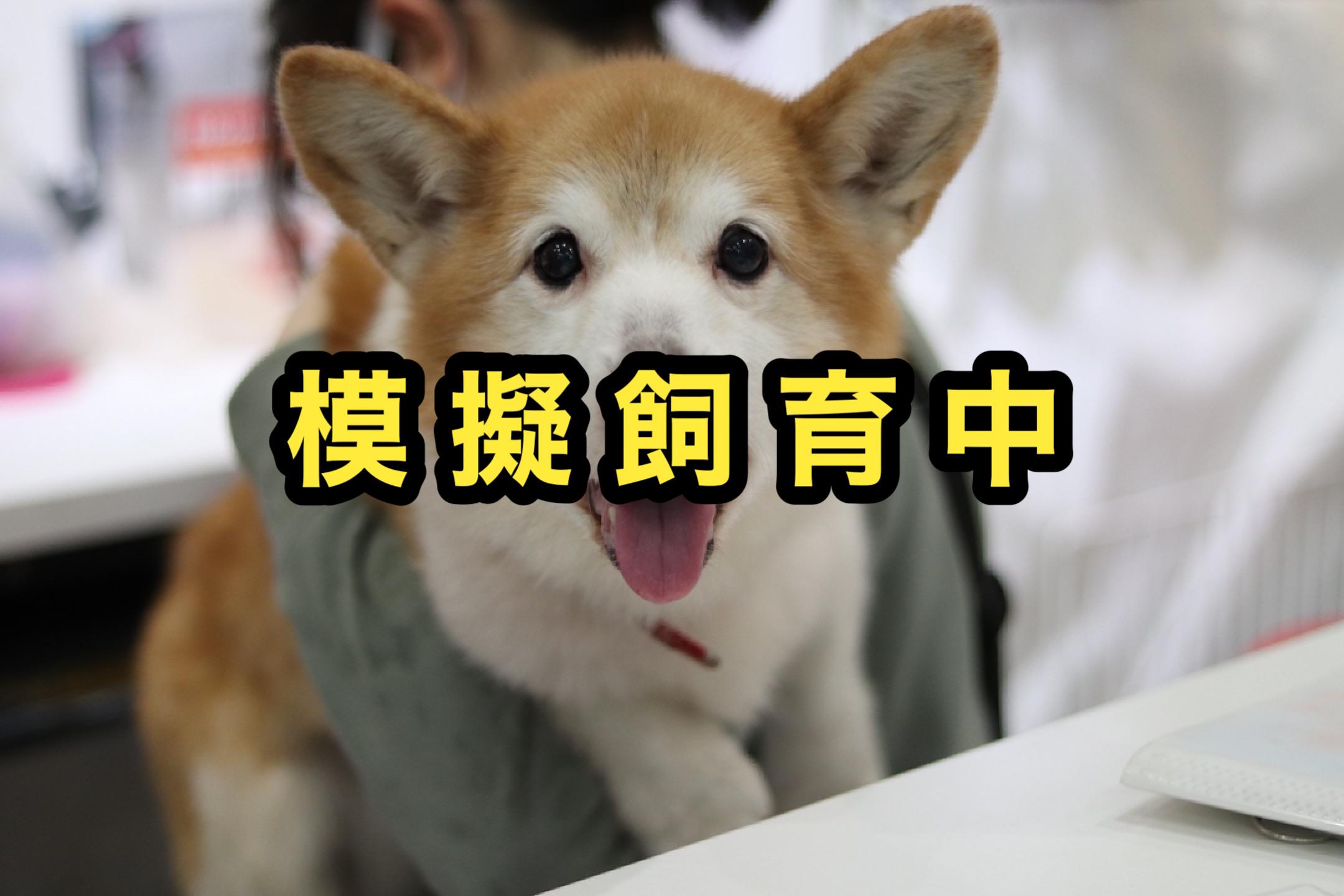 <ul> <li>犬種:ウェルシュコーギー</li> <li>性別:男の子</li> <li>名前:サンジ</li> <li>年齢:2009年春頃生まれ</li> <li>保護経緯:飼い主が多忙になり世話が出来ず飼育困難</li> </ul>