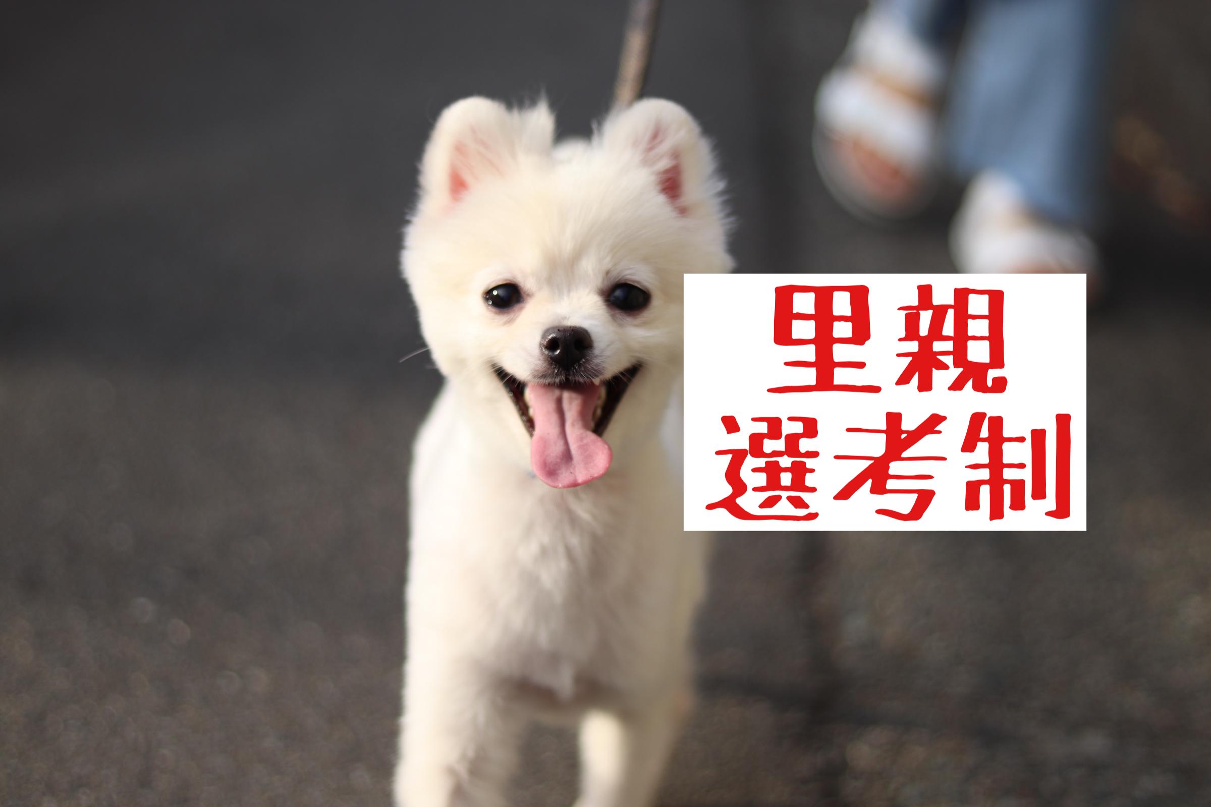 <ul> <li>犬種:ポメラニアン</li> <li>性別:女の子</li> <li>名前:おもち</li> <li>年齢:2020年7月29日生まれ</li> <li>保護経緯:転勤のため飼育困難</li> </ul>