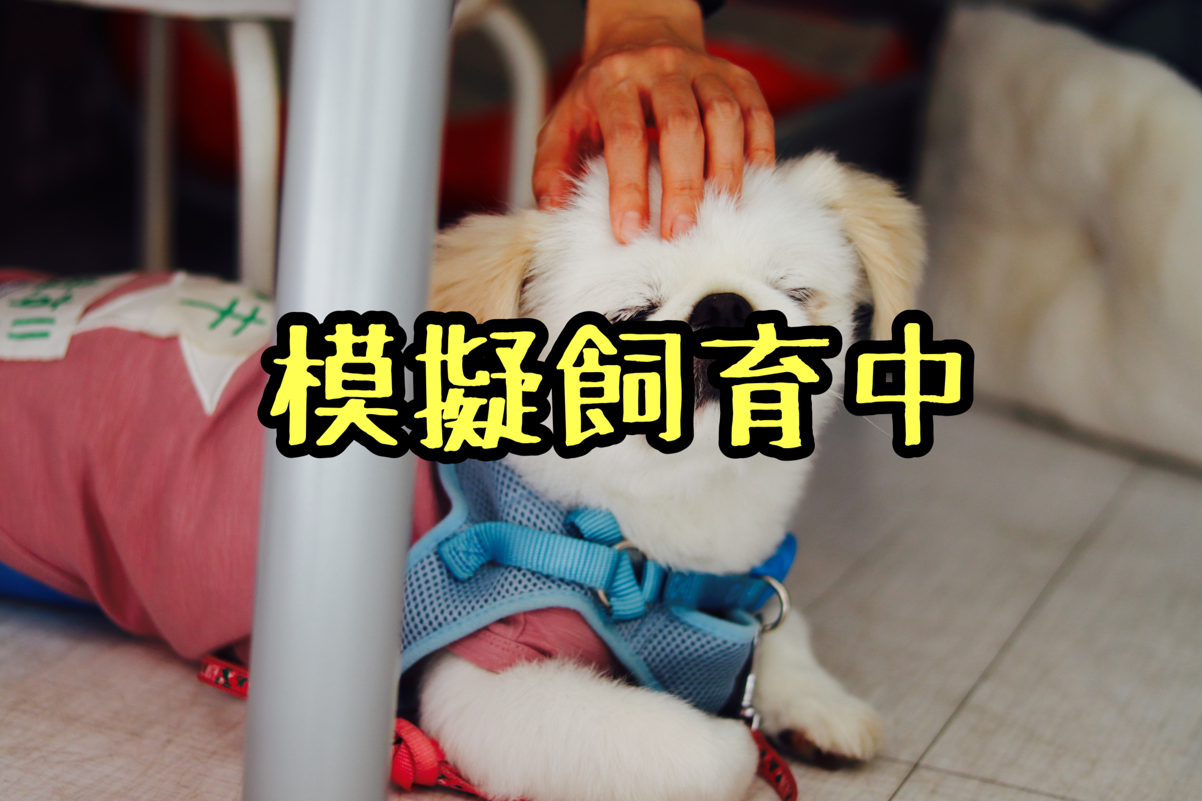 <ul> <li>犬種:ペキニーズ</li> <li>名前(性別):ペキ(男の子)</li> <li>年齢:2012年10月29日生まれ</li> <li>保護経緯:生まれた子どもに咬みつくため飼育困難</li> </ul>