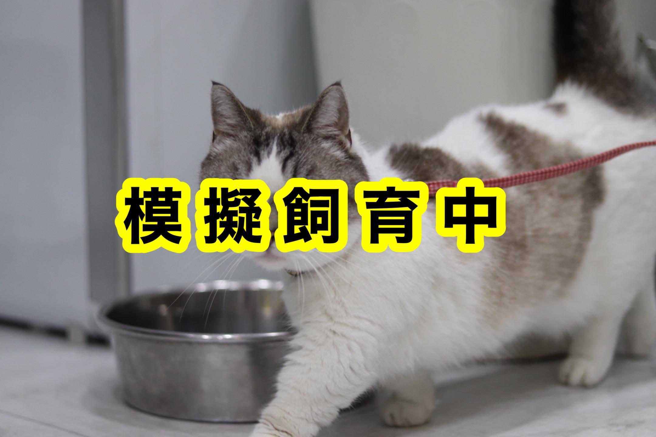 <ul> <li>猫種:マンチカン</li> <li>名前(性別):しろ(男の子)</li> <li>年齢:2010年6月1日生まれ</li> <li>保護経緯:子どもに猫アレルギー発症し飼育困難</li> </ul>
