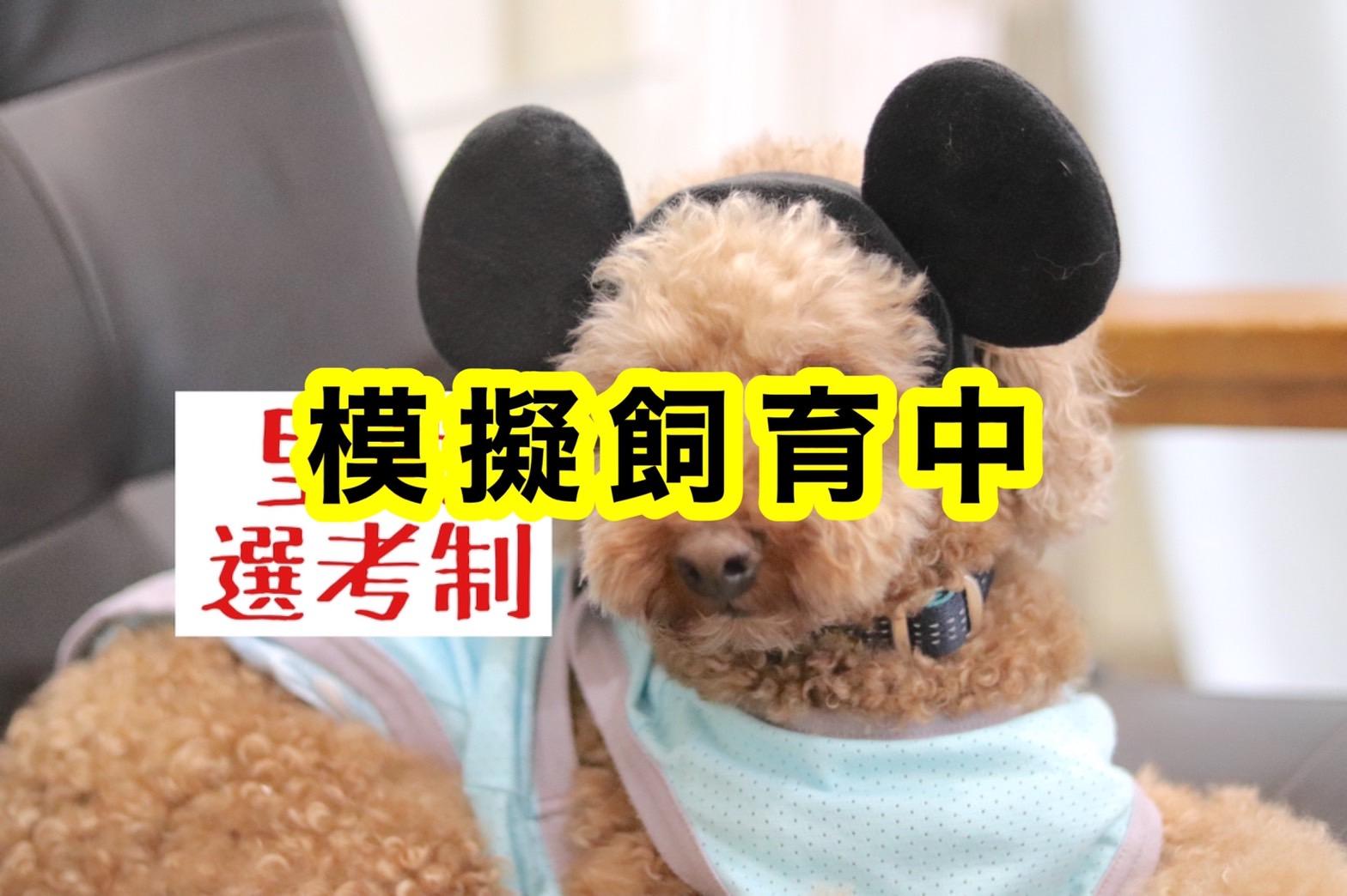 <ul> <li>犬種:トイプードル</li> <li>名前(性別):ふー太(男の子)</li> <li>年齢:2018年3月23日生まれ</li> <li>保護経緯:飼い主が高齢になり介護施設に入居し、親族も引き継いで飼うことが出来ない</li> </ul>