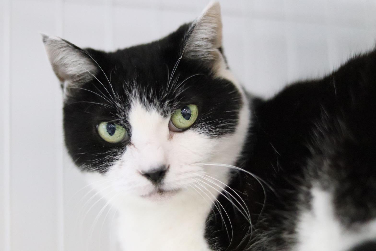 <ul> <li>猫種:日本猫</li> <li>名前(性別):チビ太(男の子)</li> <li>年齢:11歳くらい</li> <li>保護経緯:飼い主が老人ホームに入居し、親族も引き継いで飼うことが出来ない</li> </ul>